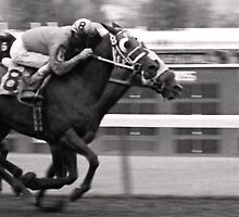 The Finish by photocracy