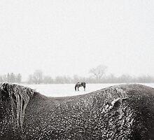 Horses in snow by Chris Jorgensen