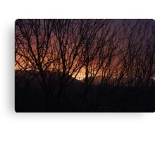 Sunset Through the Brush Canvas Print