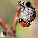 Lady Bug on a Seed Pod by Teresa Zieba