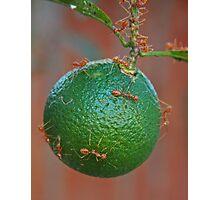 Ant Attack Photographic Print