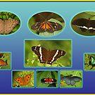 Just Butterflies by Robert Abraham
