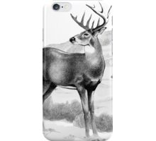 White-tail Stag Sniffing the Air iPhone Case/Skin