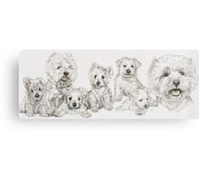 Growing Up West Highland White Terrier Canvas Print