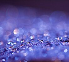 Cosytoes bokeh by benivory