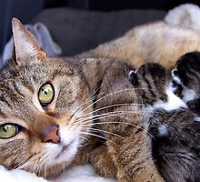 Dixey and her babies by LisaRoberts