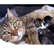 Dixey and her babies Photographic Print