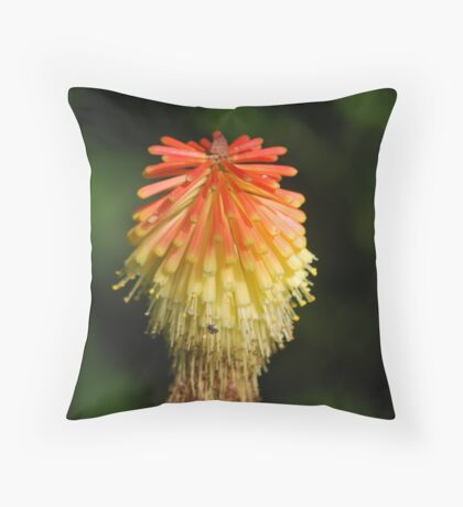 Red Hot Poker Throw Pillow