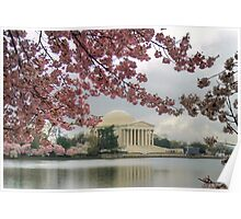 Cherry Blossoms in Washington  Poster