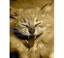 CAT OR LION? Photographic Print