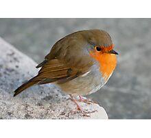 Plump robin Photographic Print