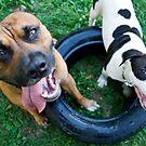 Doggie Days by Maureen  Geraghty