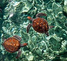 Fragile Underwater World. Sea Turtles in a Crystal Water. Maldives by JennyRainbow