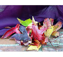 Leaves of Fall Photographic Print