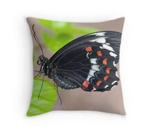 Male Dainty Swallowtail butterfly Throw Pillow