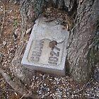 A tree grew around the headstone by MsLynn