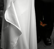 Wedding butterfly by Andrew Harris