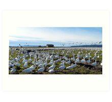 Snow Geese Twenty One Art Print