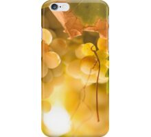 Harvest Time. Sunny Grapes IV iPhone Case/Skin