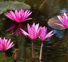 Water Lily by ZorroTran