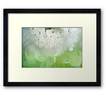 Mr. Dandelion. Inner Light Framed Print