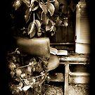 Secret Place by dimarie