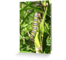 The Black Yellow & White Caterpillar Greeting Card