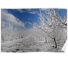 sunny apple orchard Poster