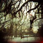 Dreams in the Hiding Tree by Christine Corrigan