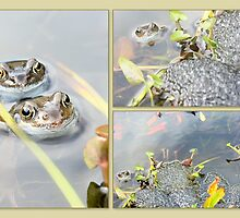 The Frogs are Back by missmoneypenny