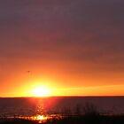 Gull Sunset cropped by elasita