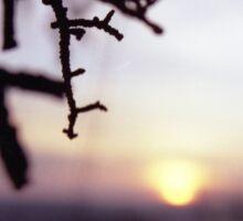 Tree branch in silhouette against sunset dusk evening sky square medium format film analog photographers Sticker