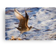 Taking off! Canvas Print