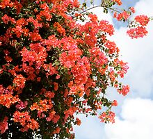 Flowering Tree by Nadine Rippelmeyer