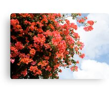 Flowering Tree Canvas Print