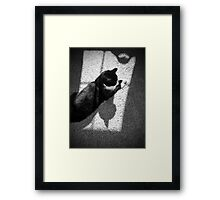 Cat Shadows Framed Print
