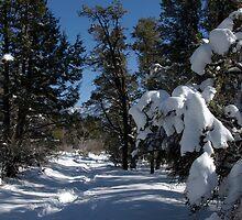 Snowy Cougar Crest Trail in the San Bernardino, mountains. by David Jones