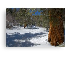 Snowy Cougar Crest Trail in the San Bernardino, mountains. Canvas Print