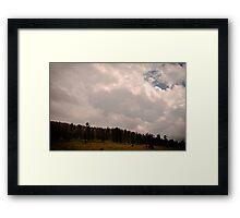 Misty Pines Framed Print