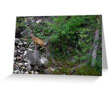Montana Rock Hopper Greeting Card
