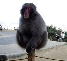 Pole Monkey by Dragnet157