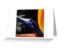 Paradise Arrow Greeting Card