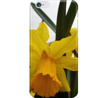 yellow daffodil flowers. floral photography. iPhone Case/Skin