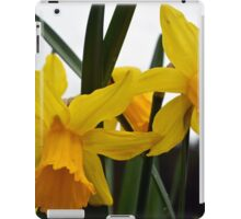 yellow daffodil flowers. floral photography. iPad Case/Skin