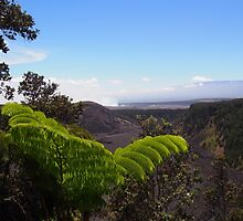 View: Hawai'i Volcanoes National Park by Sally Kate Yeoman