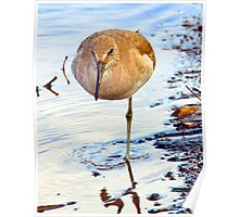 Whimbrel Poster