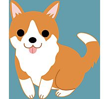 cute corgi pup Photographic Print