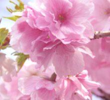 Double cherry blossoms Sticker