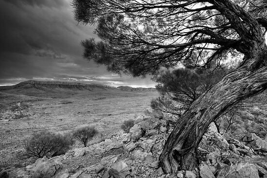 Acacia over Ormiston Pound B&W HDR by Steven Pearce