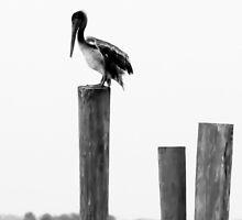 Pelican by Dragonmaiden88